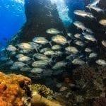 Sail Rock Dive Tour